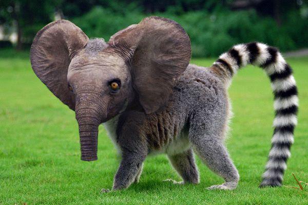 109 Best Animals Images On Pinterest: 28 Best Animal Splicing Images On Pinterest