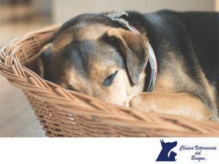 https://flic.kr/p/VdpkEH   Mi perro no quiere comer. CLÍNICA VETERINARIA DEL BOSQUE 2   Mi perro no quiere comer. LA MEJOR CLÍNICA VETERINARIA DE MÉXICO. Existen varias razones por las cuales tu perro puede dejar de comer. Si está estresado, acaba de ser operado o consume alimentos, o por la edad ya no tiene tanto apetito, pero esto no significa que esté enfermo. Aunque la causa más común por la cual un perro deja de comer, es que está aburrido de comer lo mismo. En Clínica Veterinaria del…