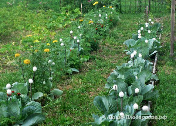Яичная скорлупа в помощь огороднику