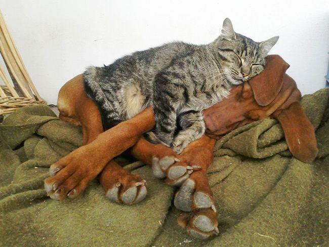 25 доказательств того, насколько коты многогранны и талантливы – Фитнес для мозга