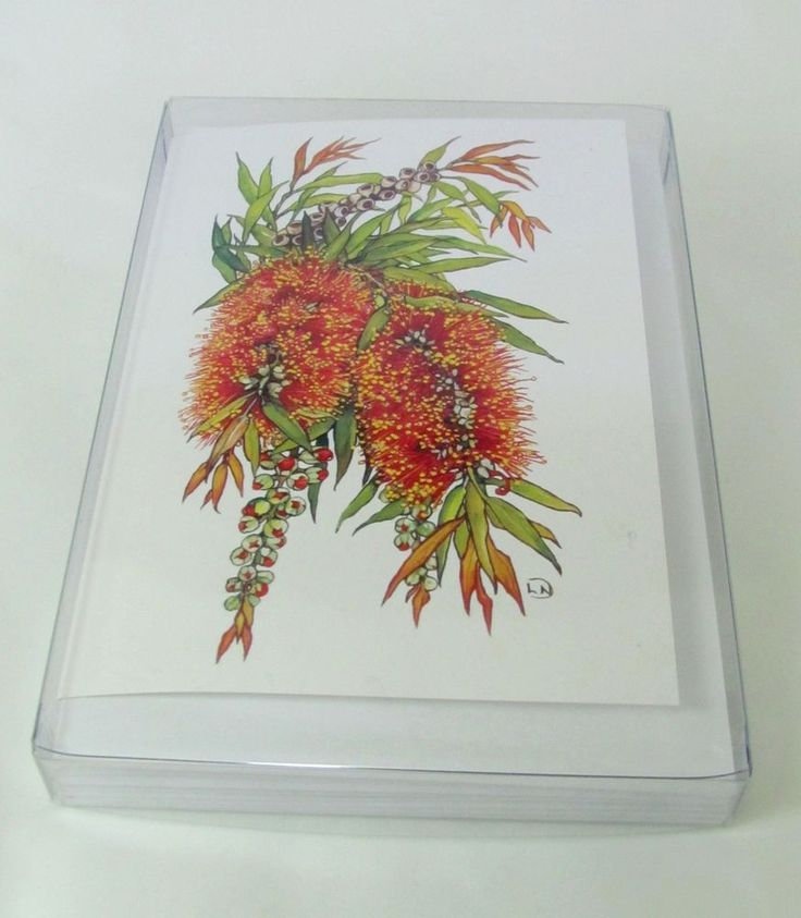Note Cards set of six boxed Cliff Bottlebrush. Artwork by Lynn Naismith