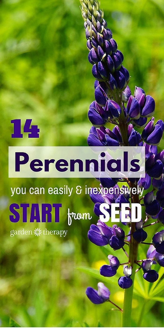 Save Money and Start these 14 Perennials from Seed - Garden Therapy #seedstartin...