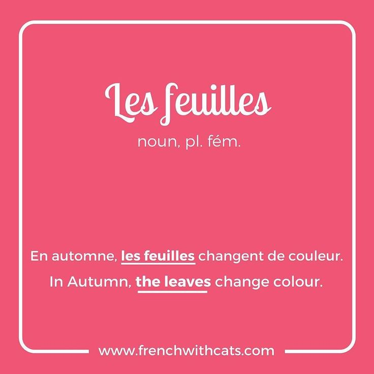 #Learnfrench in a fun way with our #French #WordOfTheDay. Today's word=les feuilles=the leaves