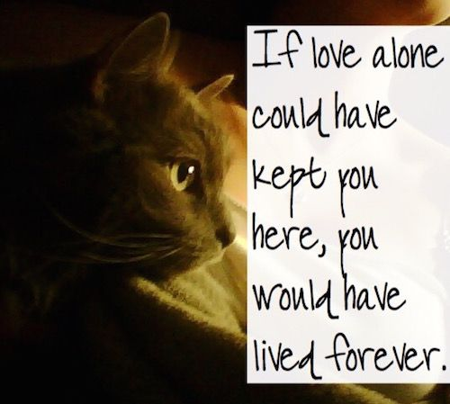 Such comforting words during the tremendous grief from the loss of a pet.
