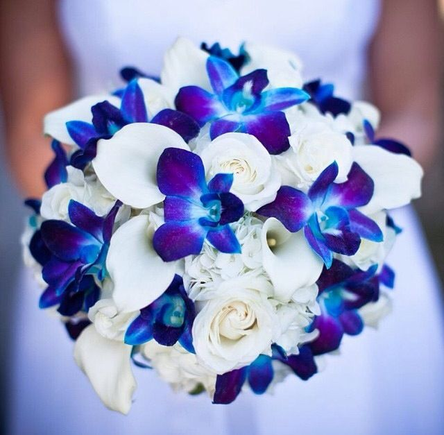 Blue Violet and White