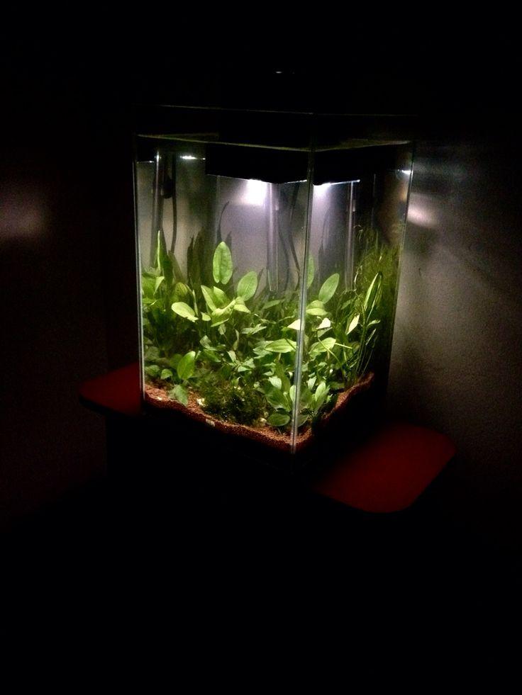 M s de 1000 ideas sobre plantas de poca luz en pinterest - Plantas de interior sin luz ...