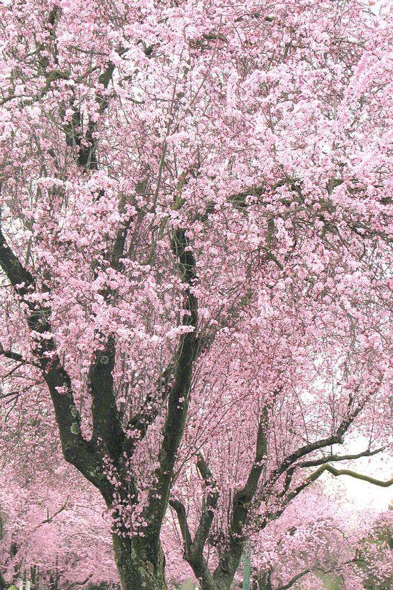 """""""Feng Shui handlar om enkelhet i livet utan att för den skull vara minimalistisk. Att samspelet mellan den yttre miljön och den inre känslan ger ett ökat välbefinnande. Huvudtanken med en vacker miljö är inte stilen, utan balansen mellan människan och dess omgivning. Men kanske det allra viktigaste, att kompensera och att använda motsatsförhållanden i sitt liv och i sin inredning"""". /Jannice Wistrand"""