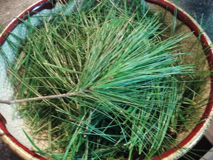 Wash and bath the iroquois burned pine wood chips needles or pine