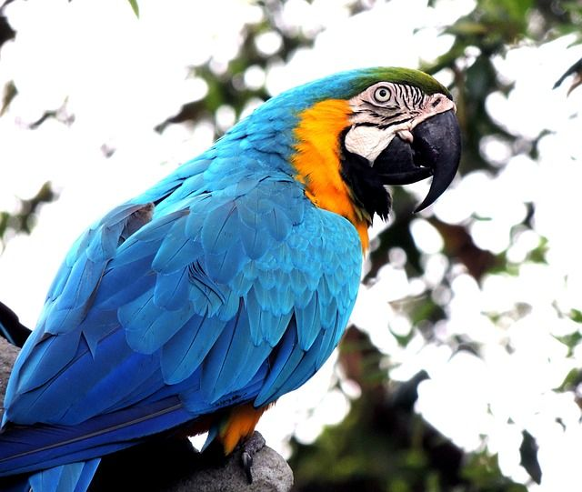 Ara, Pappagallo, Uccello, Animale Domestico, Natura