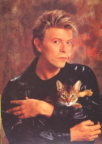 bahahaha : Cat People, Abyssinian Cat, Famous People, Celebrity Cat, Rocks Stars, David Bowie, Famous Cat, Cat Lovers, Cat Photos