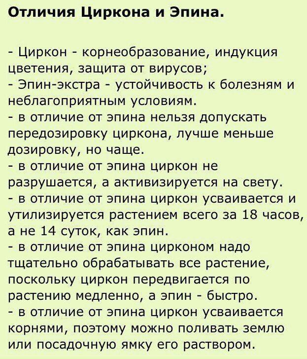 Черенки пеларгоний в Екатеринбурге