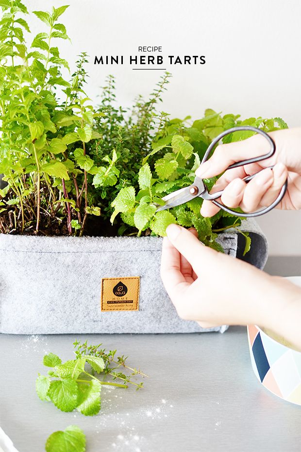 Equa Home is a line of products that will enable you to start growing your own tasty food in the comfort of your own home. Equa Home are easy to use and durable gardening pots that ensures you great results whether you're planting vegetables, spices or simply decorative flowers and plants.  #equahome #design #hanginggarden