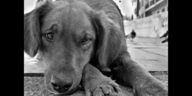 Alarmantes cifras de abandono animal en España.