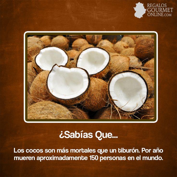 ¿#SabíasQueLos cocos son más mortales que un tiburón?#Curiosidades#Gastronomía