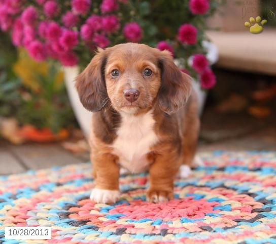 Puppies, Puppies and More Puppies! ~ Bryan from East Earl, PA