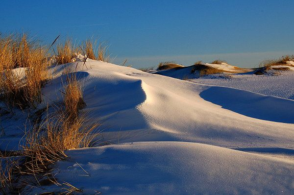 Sylt, Germany, Northsea- the dunes