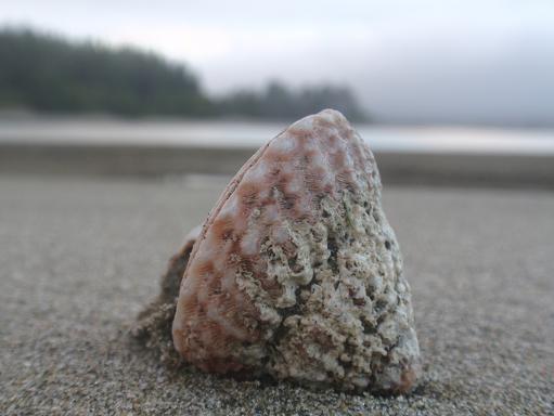 Mooie schelpen op het strand.