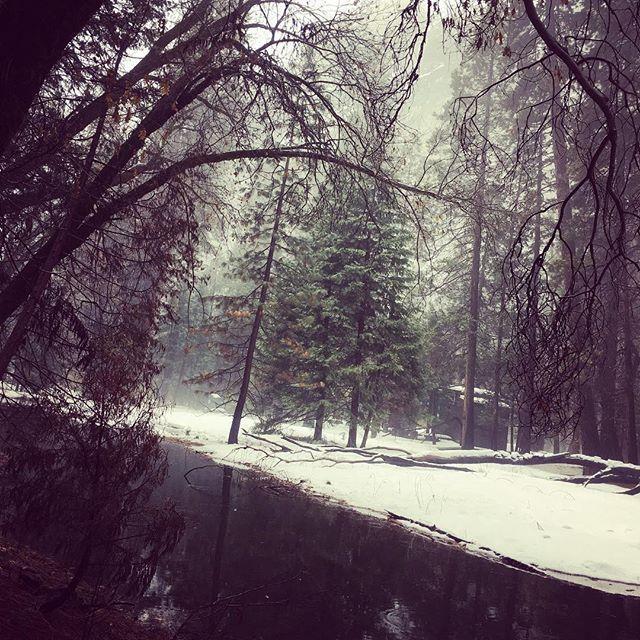 【yayanoopy】さんのInstagramをピンしています。 《Beauty of nature 2. マイナスイオンたっぷり。 #nature #forest #stream #snow #amazing #yosemite #national #park  #california #ca #usa #westcoast #trip #自然 #森 #小川 #雪 #素晴らしい #ヨセミテ #国立公園 #カリフォルニア #アメリカ #西海岸 #旅行 #ウキウキ #ワクワク #母なる自然 #偉大だ #マイナスイオンを浴びて精神統一 #ふぁさー》