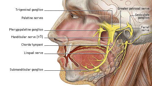 Facial Nerve ( VII Cranial nerve)