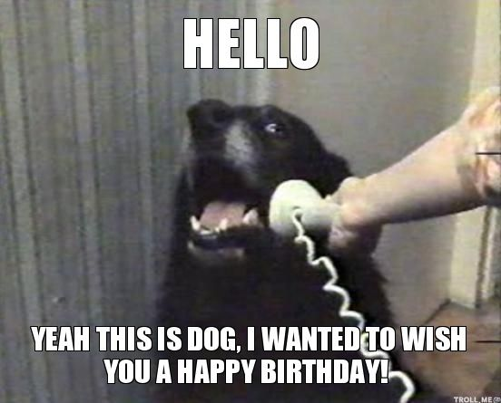 Happy Birthday Animal Meme (15)