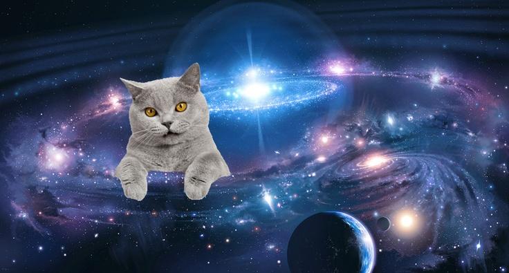 Galaxy cat! | lol | Pinterest