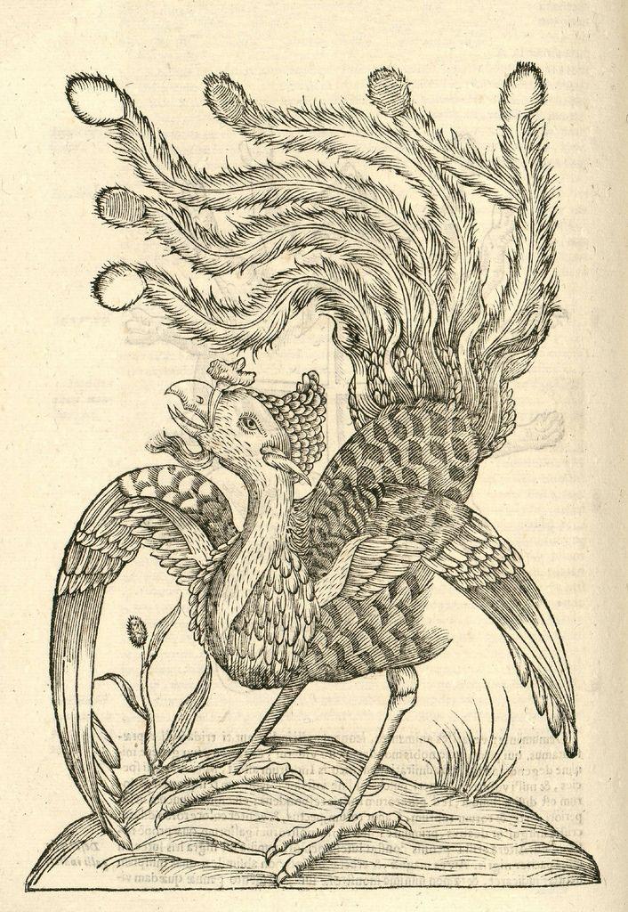 (via BibliOdyssey: Monstrorum Historia)