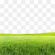 Resultado de imagen de png grass