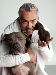 Cats and Dogs | Dog Whisperer Cesar Millan