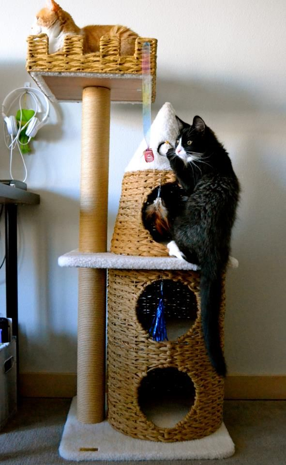 Bon Cats Love Windows, So Surely They Would Love A Window Perch. We Take A  Closer Look At 4 Popular Cat Perches And Weigh The Pros And Cons Of Each  One.