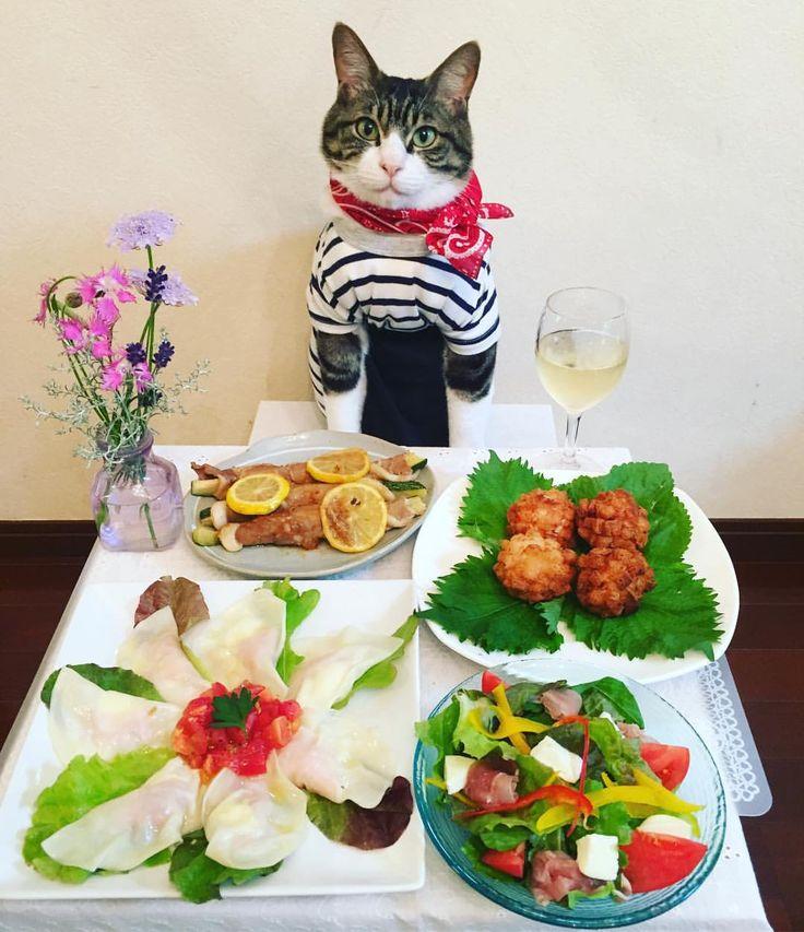 Honey lemon's pig-wrapped zucchini, Mozzarella water dumplings,Shrimp dumplings,Salad #cats#cat#catstagram#catsofinstagram #instacat_meows#instacat_models#bestmeow#sweetcatclub#picneko#food#chef# #にゃんすたぐらむ#にゃんこ#ふわもこ部 #みんねこ#ねこ#ネコ#猫#マカロニレシピ #はちみつレモンの豚巻きズッキーニ#白ワイン #モッツァレラ水餃子#海老団子のあじさい揚げ#斉藤和義 #mannishboys