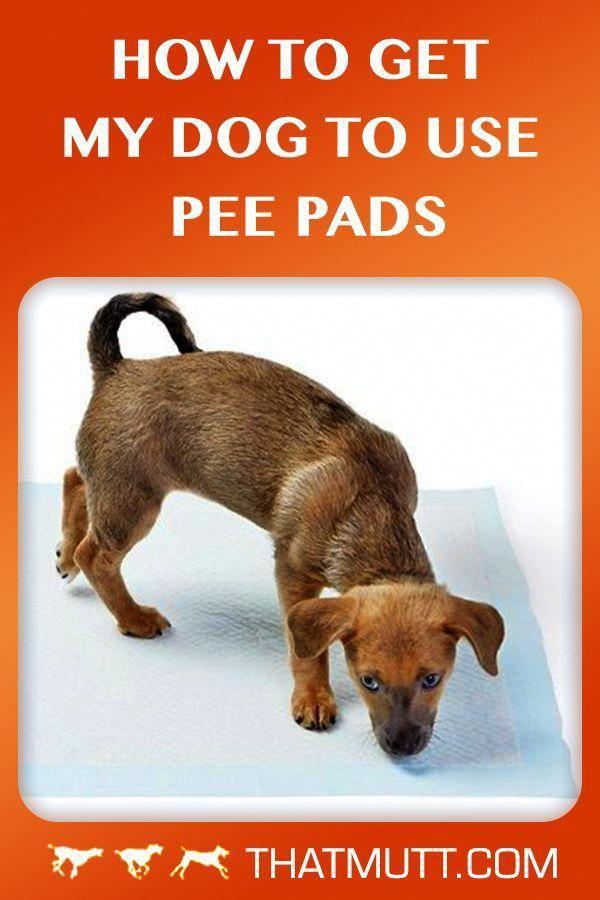 a1e6275c25449f9f824cf5621d762c13 - How To Get My Puppy To Use Puppy Pads