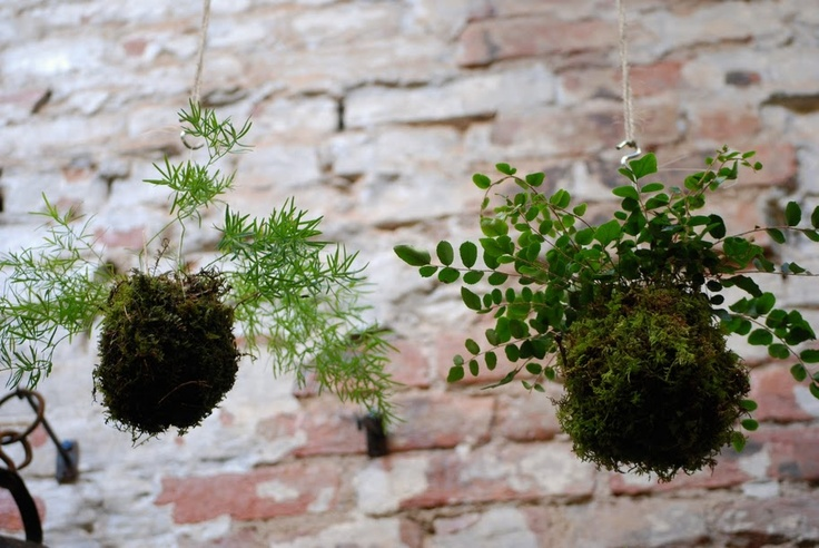 Kokedama (Japanese String Gardens) - so intriguing!!  From what I understand, can be done with indoor or outdoor plants...must learn more about this!!
