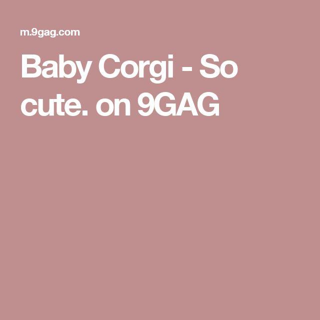 Baby Corgi - So cute. on 9GAG