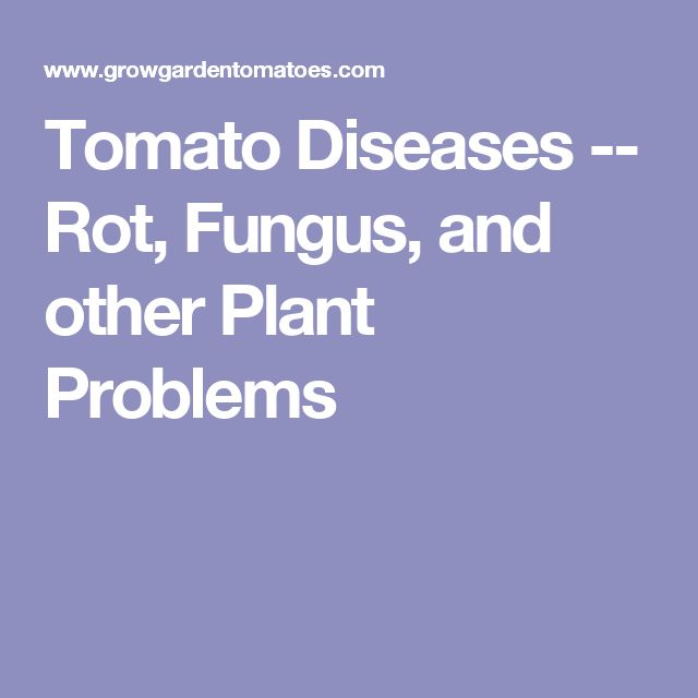 Tomato Diseases -- Rot, Fungus, and other Plant Problems