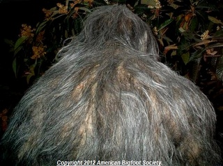 Bigfoot Evidence: The Clearest Photo Of Bigfoot Since Patterson-Gimlin Released By Melissa Hovey?