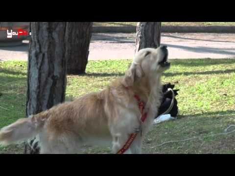 Un argomento molto comune per tutti i proprietari di cani e gatti: le neoplasie. Prevenzione, diagnosi e cure. Ce ne parla Vittoria Trocino.