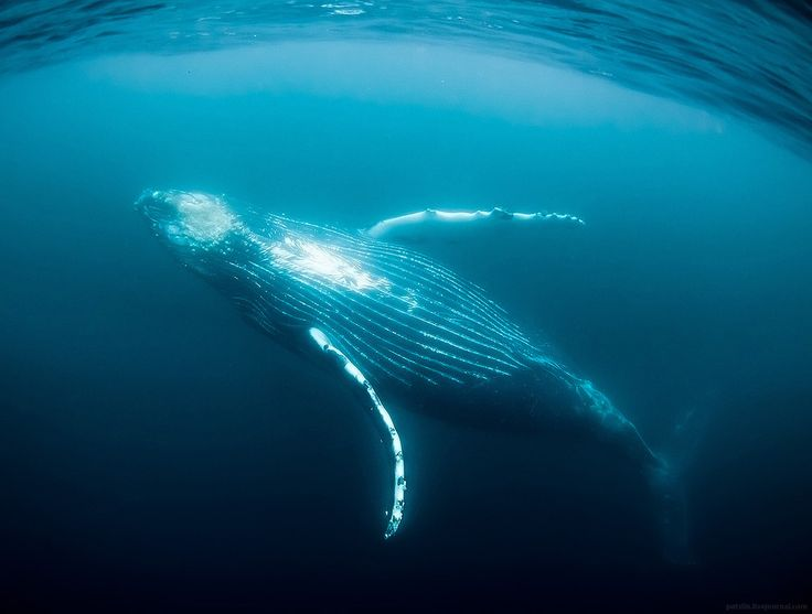 Amazing Blue Whale | OMG Amazing Pictures - Most Amazing Pictures on The Internet