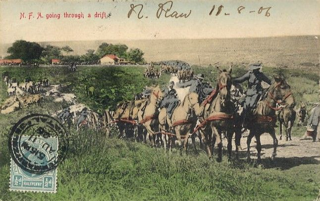 Natal Field Artillery, South Africa - a typical military postcard of the Edwardian era.  Fought on the British side in the Boer war
