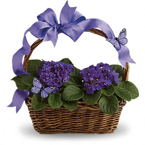 Violets And Butterflies  Price:  US$45.99  Velvety violets, beautiful butterflies, a radiant ribbon and a basketful of delight. This gift delivers so much and it's perfect for so many occasions. Think birthdays, baby showers, showering someone with love. When it comes to this basket, it's all good!