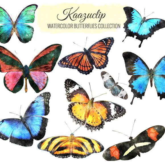Watercolor Butterflies Collection by Kaazuclip on @creativemarket