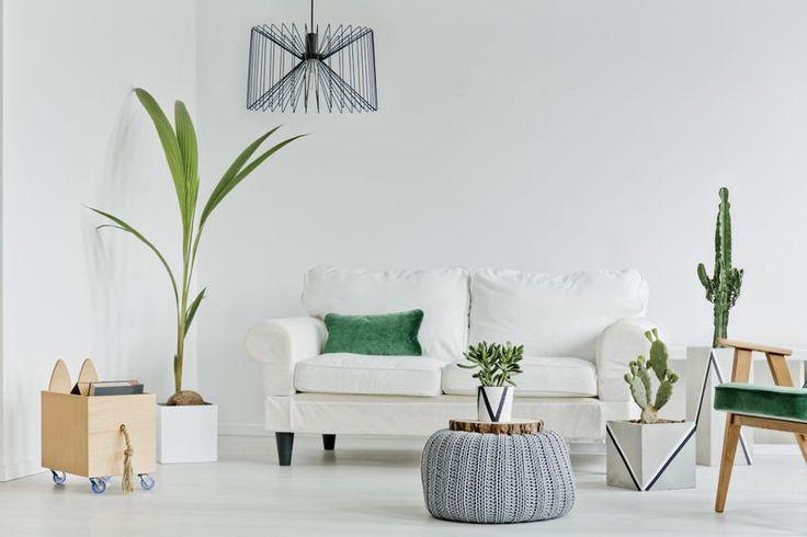 Salon dla miłośników roślin i niebanalnych rozwiązań aranżacyjnych. Nowoczesny, przestronny, jasny. #design #urządzanie #urząrzaniewnętrz #urządzaniewnętrza #inspiracja #inspiracje #dekoracja #dekoracje #dom #mieszkanie #pokój #aranżacje #aranżacja #aranżacjewnętrz #aranżacjawnętrz #aranżowanie #aranżowaniewnętrz #ozdoby #salon #salony #roślina #rośliny #roślinność #kwiat #kwiaty #lampa #lampy