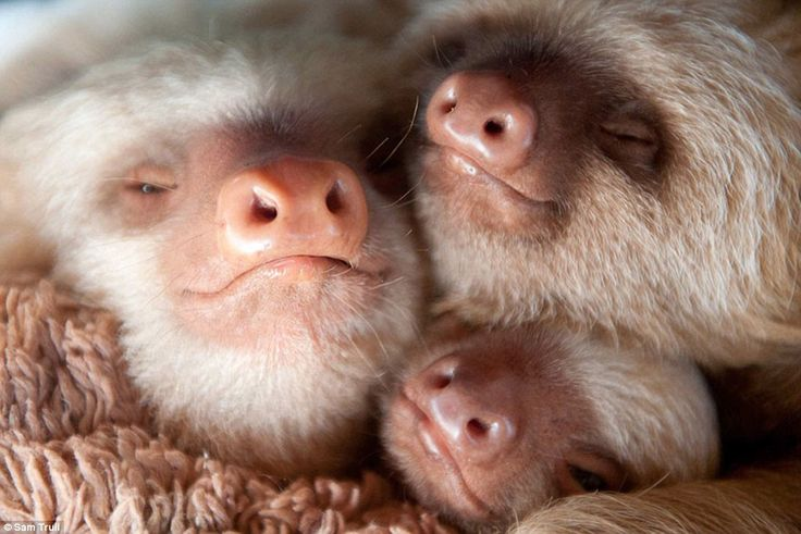 Snuggles: Three babies huddle together during nap time and look extremely cosy in their surroundings