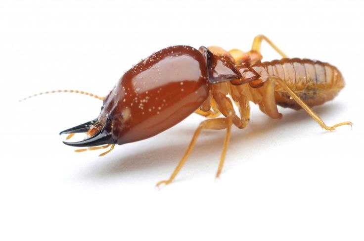 If you are looking for best and Top pest control services in Sydney then safe pest control is providing best and professional services with guaranteed.