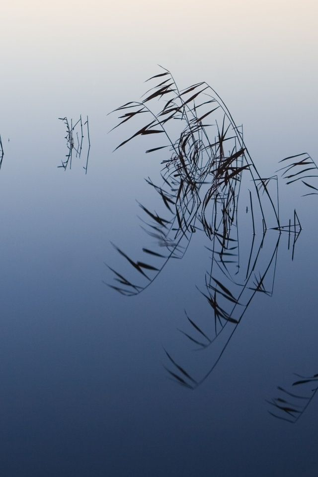 Pond Reeds iPhone Wallpaper | zen | Pinterest | Wallpapers ...