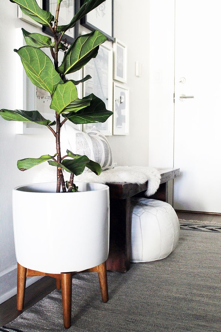 Best 25+ Large indoor plants ideas on Pinterest | Plants ...