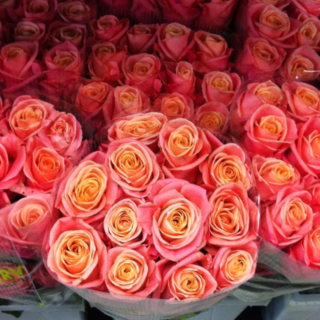 Miss Piggy roses - ignore the arrangement! These are a similar shape to Avalanche but are orange through to a coral/pink.