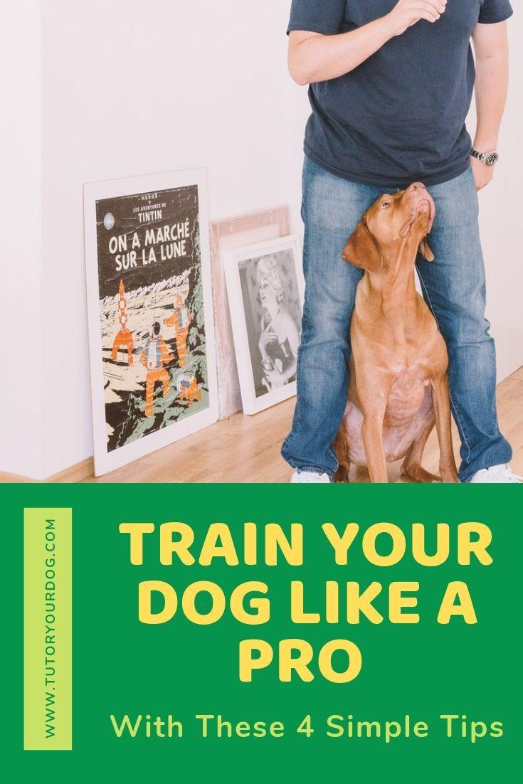 4 Secrets To Train Your Dog Like A Pro Training Your Dog Dog