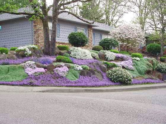 Phlox ajuga woolly thyme for a slope garden for Hillside landscaping plants