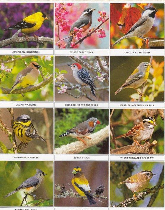 Kalender Meja AO dan Tips Mendesain di Percetakan Ayu Karawang - Kalender Meja Burung Cantik 2