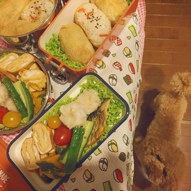 おはようございます😃 いなり弁当 油揚げは作り置き😏 ラクラク弁当です #毎日お弁当 #パパ弁 #息子弁 #いなり弁当  #トイプードル #ドワーフタイプ #愛犬  #ふわもこ部 #癒し犬 #お留守番犬 #寝起き